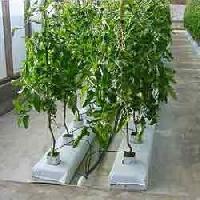 Coir Pith Grow Bag