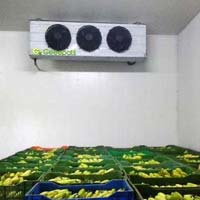 Mangoes Repining Chambers