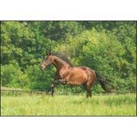 Horse Probiotics