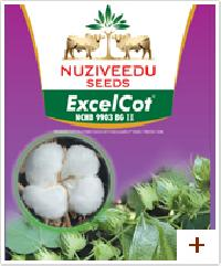 Excel Cot Cotton Seeds