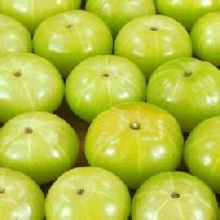 Indian Fresh Amla
