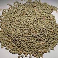 Guar Seed