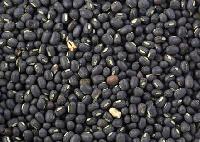 Black Gram Seed