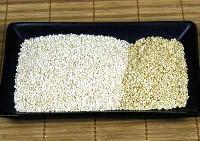 Sesame Seeds-04