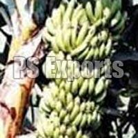 Fresh Sirumalai Banana