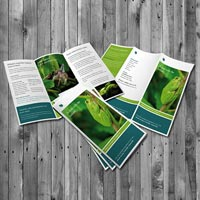 A4 Brochure Offset Printing