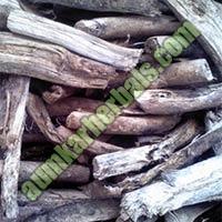 Moringa Root