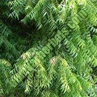 Neem Tree Parts