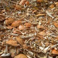 Dried Crab Shells