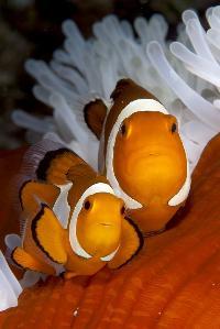 Imported Marine Aquarium Fishes