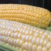 Yellow & White Corn