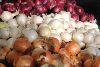 Fresh Red Onion