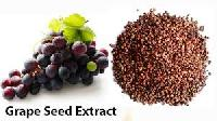 Grape Seed Extracts