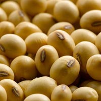 Gmo Soybean Seeds