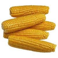 Yellow Maize Seeds