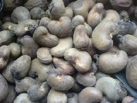Cashew Nuts Shells