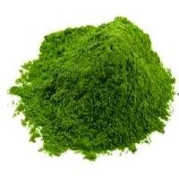 Curry Leaves Powders