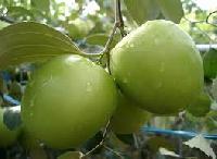 Apple Bor Fruit