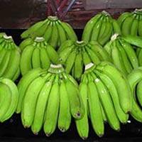 Cavandish Banana