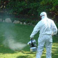 Fogging Pest Control