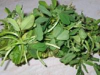 Methi (fenugreek Leaves)