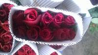 Fresh Rose