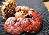 Medicinal Mushroom