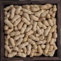 In Shell Peanuts