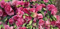 Organic Farms Flowers