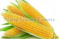 Fresh Yellow Corn