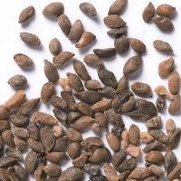 Shrub Seed