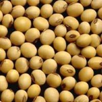 Soya Lecithin Seeds