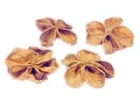 Exotic Dried Flowers