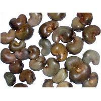 Cashew Shell