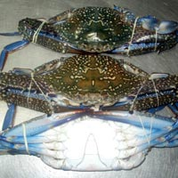 Frozen Blue Swimming Crab