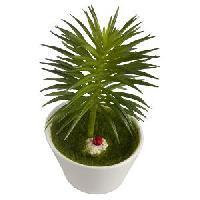 Fennel Bonsai Mini Artificial Plant