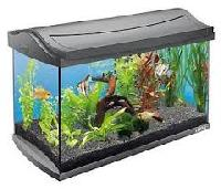 Glass Fish Aquarium