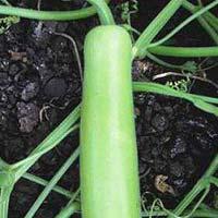 Hybrid Bottlegourd Seeds
