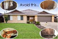 Termite Control Pest Control Services