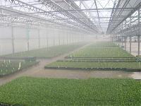 Fog Humidification System