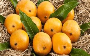 Fresh Alphonso Mango
