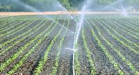 Micro Drip Irrigation System