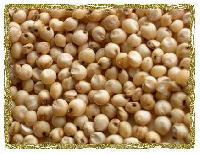 Yellow Sorghum Seeds