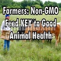 NON-GMO Animal Feed Guar Korma