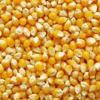Yellow Corn