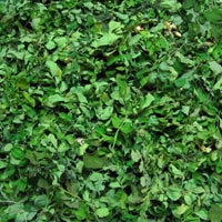 Organic Moringa Leaves