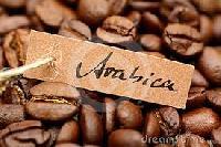 Arabica A Coffee Bean