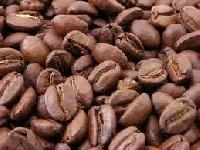 Robusta A Coffee Bean