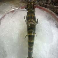 Tiger Scrimps (Prawns)