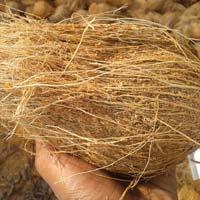 Semi Husked Fresh Coconuts